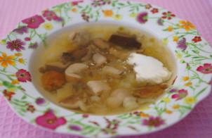 Суп из свежих лесных грибов